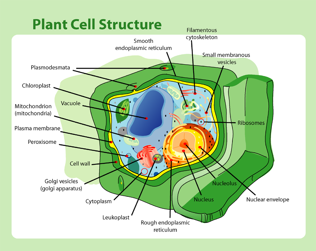 an analysis and an explanation of mitochondria a tiny organelles found in eukaryotic cells You can do all this because you are made of cells — tiny units of life that are like   there are two main types of cells, prokaryotic and eukaryotic  mitochondria  are also somewhat unique in that they are self-replicating and have their own.