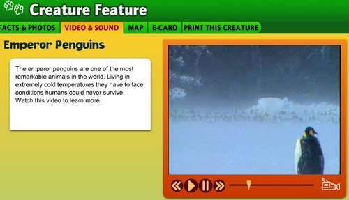 Penguins - Map videos for kids