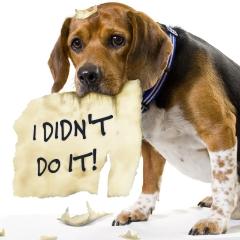 Dog saying he didn't eat the homework