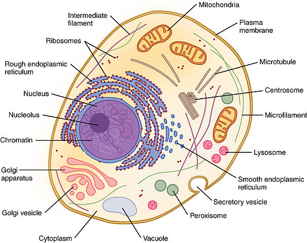 the cell site rh my ecoach com Plant and Animal Cells Labeled Plant Cell Diagram Labeled