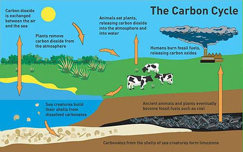 Ocean Acidification & Climate Change